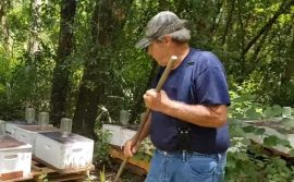 dead florida honey bees