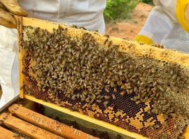 beekeeper in Athens TX