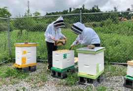 pa school apiary for honey bees