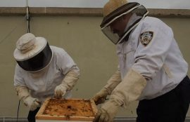 NYPD Beekeepers saving honey bees