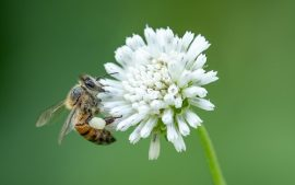 EPA lawsuit to protect honey bees