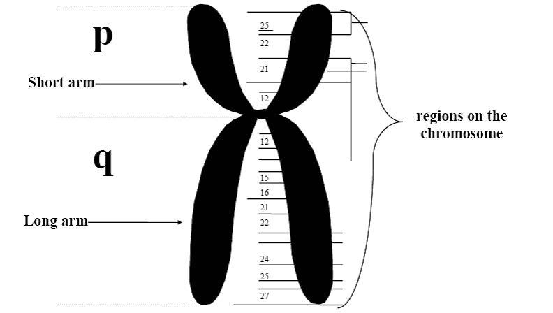 Appendix R: Cytogenetic Abbreviations and Terminology