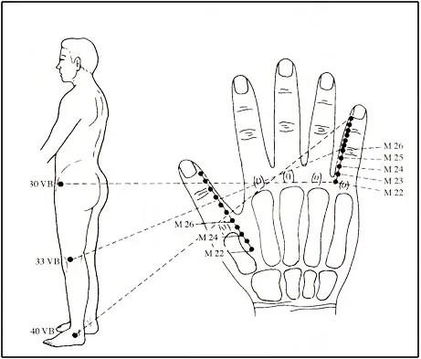 main-jambe