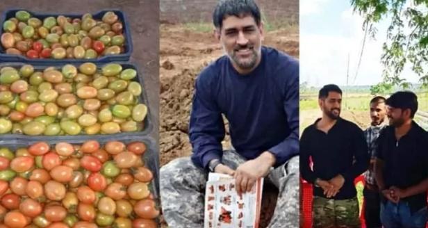 क्रिकेट बाद अब धोनी सब्जी बेचने की तैयारी