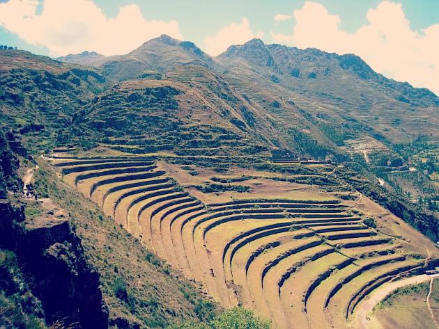 Potato Inca Farm