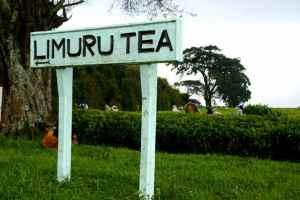 Limuru Tea