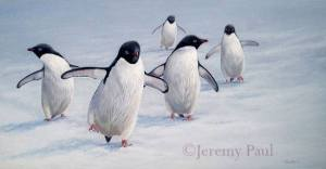 jeremy-paul-penguins