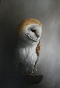 jeremy-paul-barn-owl