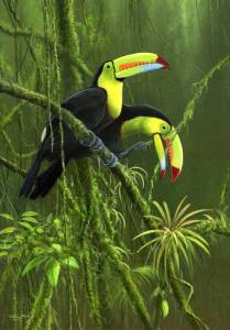 jeremy-paul-toucans