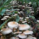 carol-freeland-mushrooms_opt