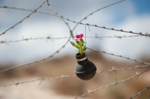 West-Bank-garden-of-tear-gas-grenades-