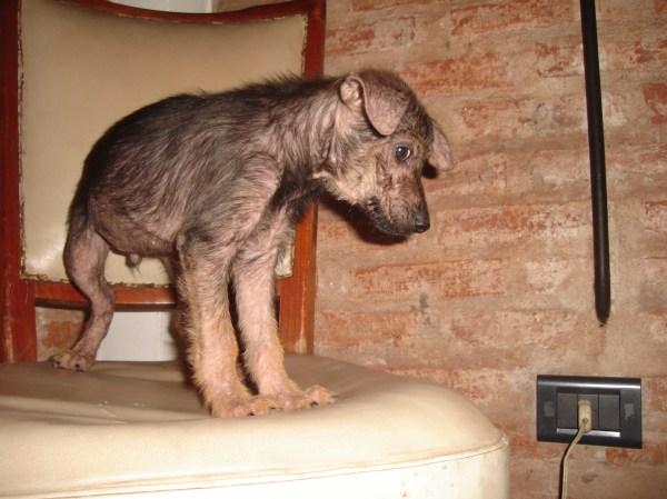 Perros Cachorros En Adopci . Chaco Gina 4