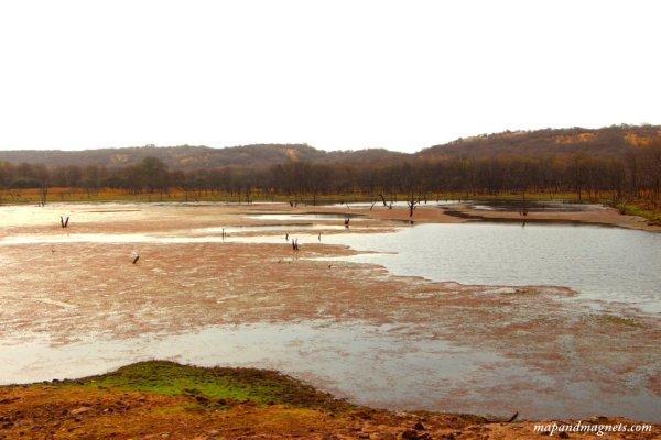 Ranthambore lakes