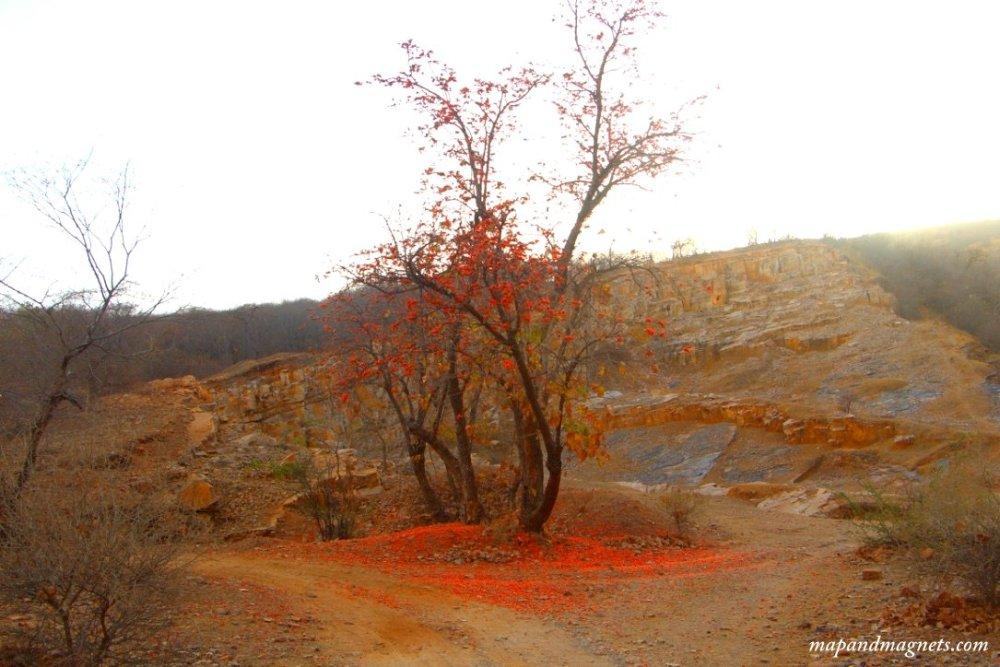 Ranthambore red tree