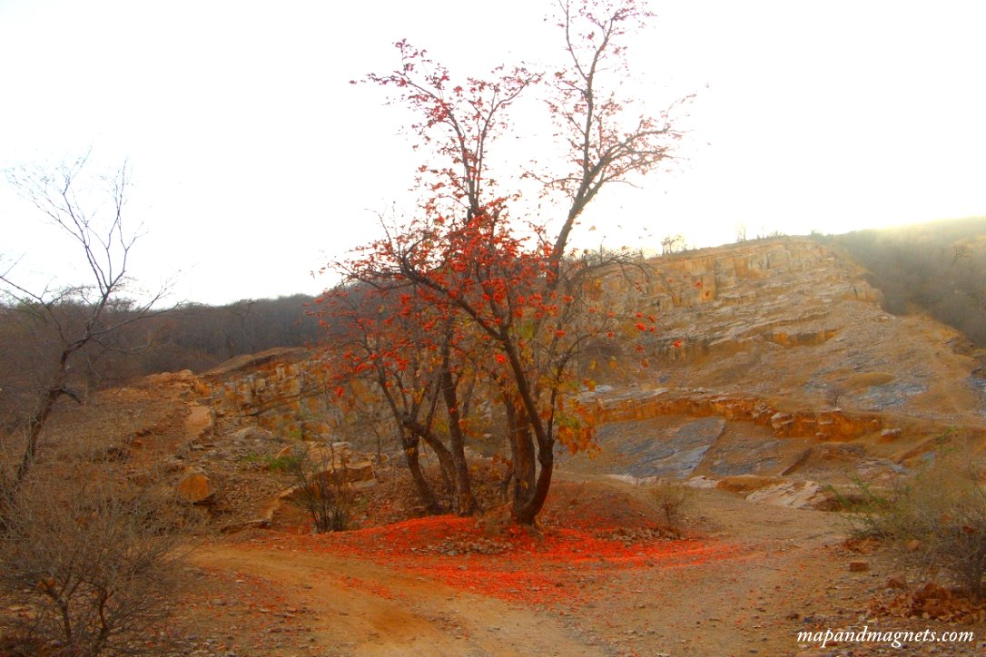 Ranthambore red tree