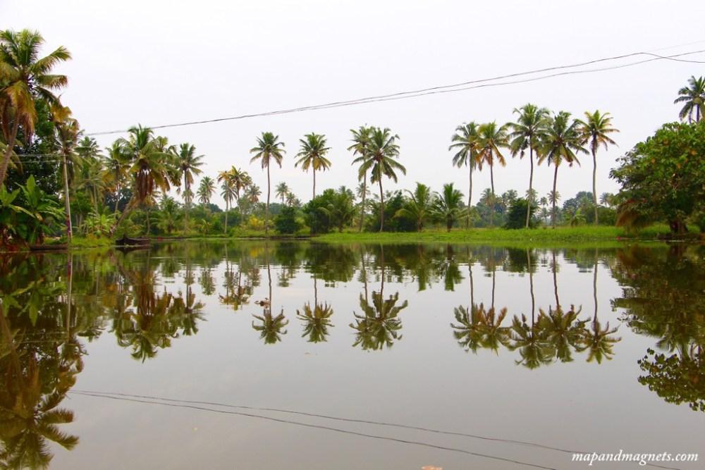 Kerala backwaters palm trees