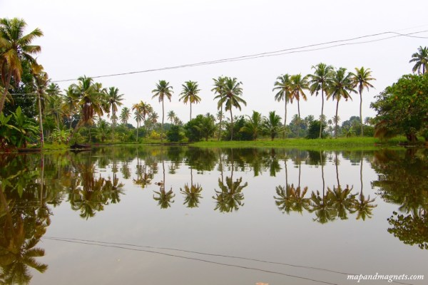 Kerala backwaters palm trees