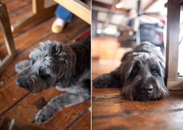 Dogs Parker & Otis