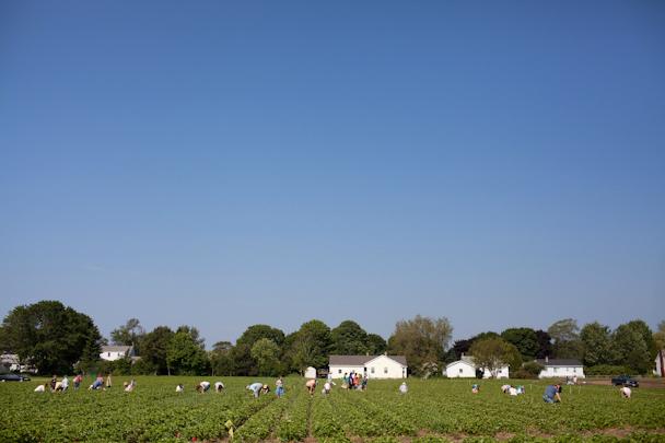 Maxwell's Farm