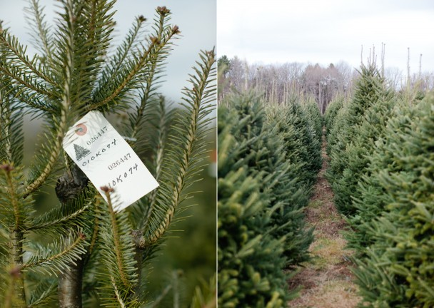Christmas Tree Farm Cape Elizabeth