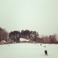 Orvis sprinting in the snow