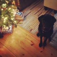 Orvis waiting to open presents!