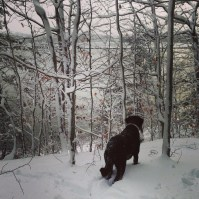 Snowshoeing in the woods