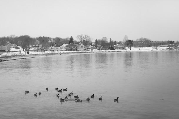 Willard-Beach-Ducks