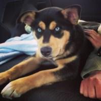 Foster Pup, Micah