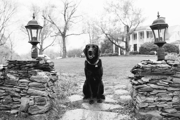 Clifton Inn Dog Friendly