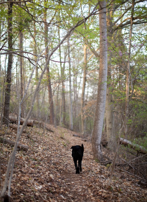 Hiking with Orvis