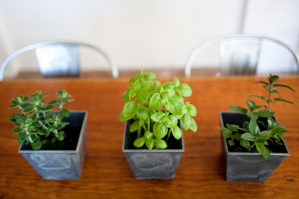 Potted Herbs