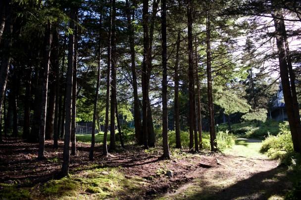 Isle of Springs Woods