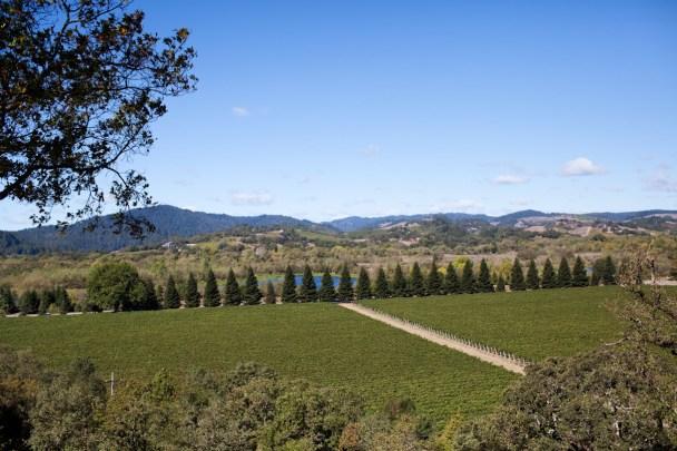 Copain Winery Photos