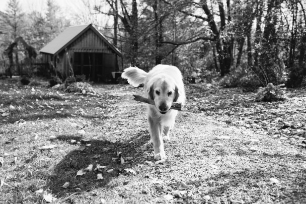 Mason at Marianmade Farm