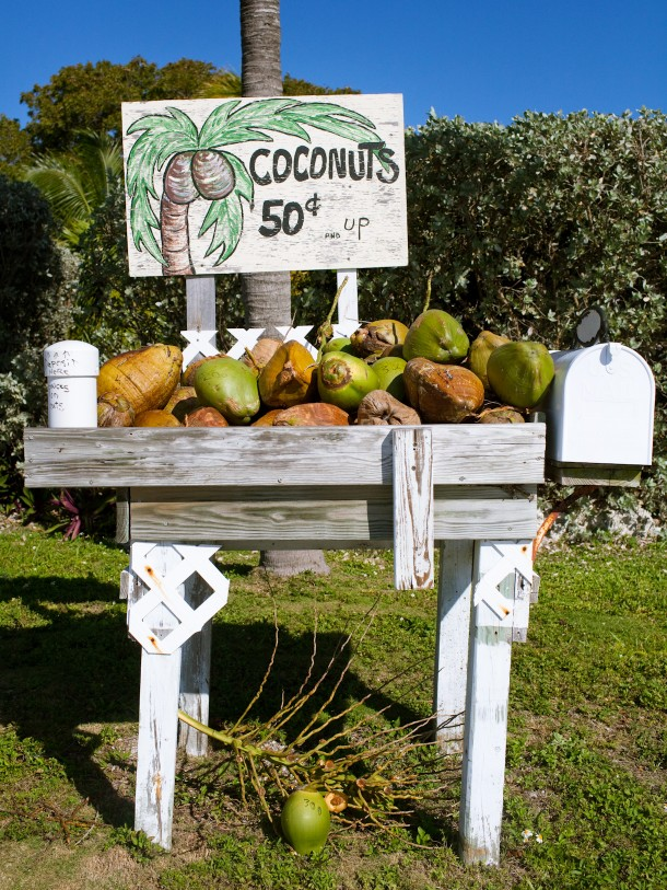 Coconut Stands Florida Keys