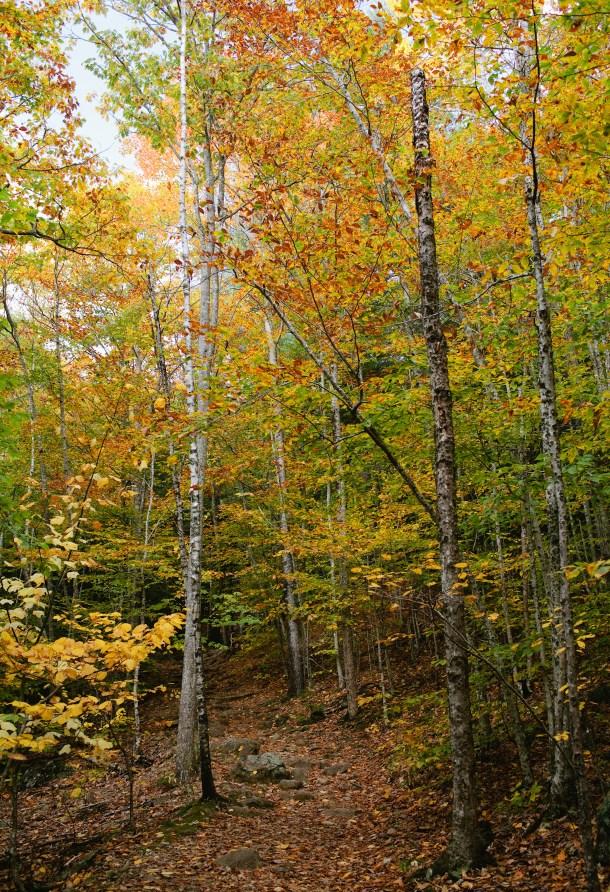 Maiden-Cliff-Trail