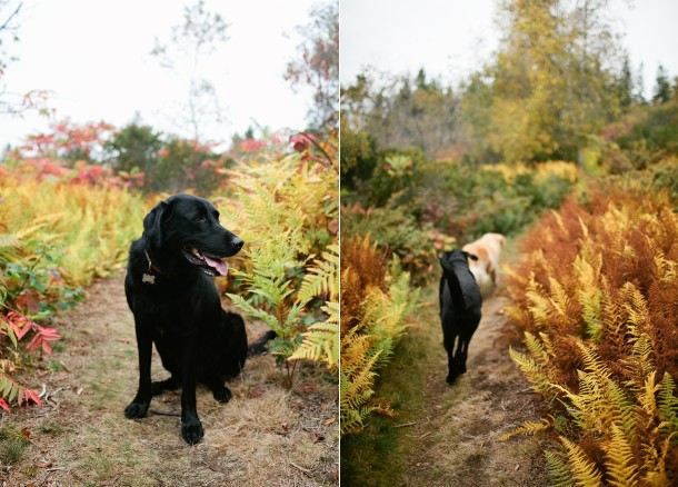 Maine Dog Friendly Vacations