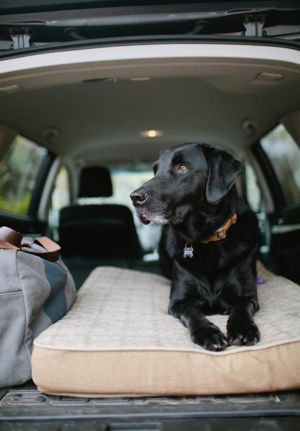 Orvis in the Subaru