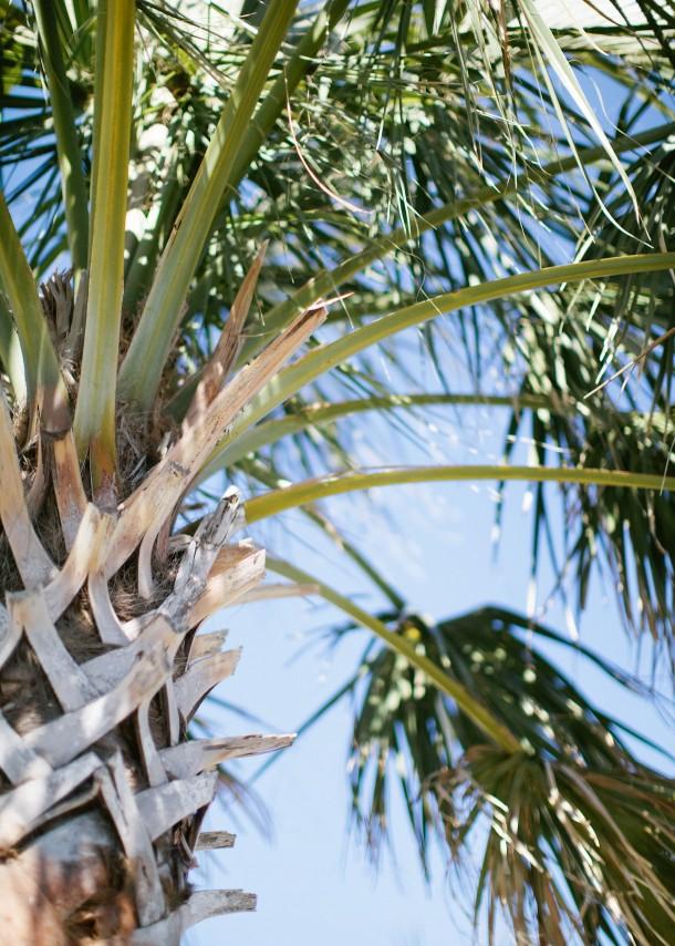 Sabal-Palm-Bald-Head-Island