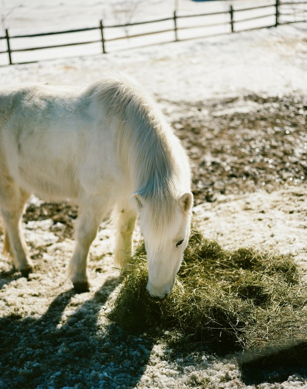Icelandic Horse Farm Waitsfield
