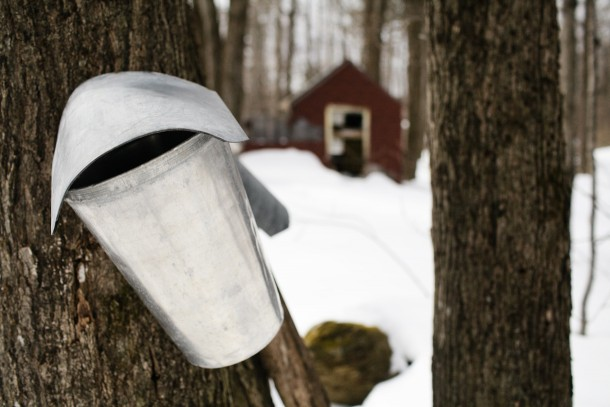 Vermont Maple Season