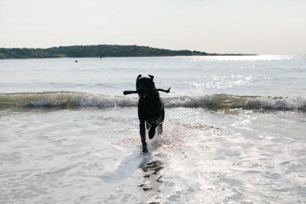 Swimming Orvis