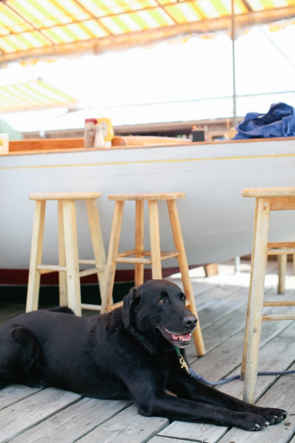 boat-bar-dog-friendly