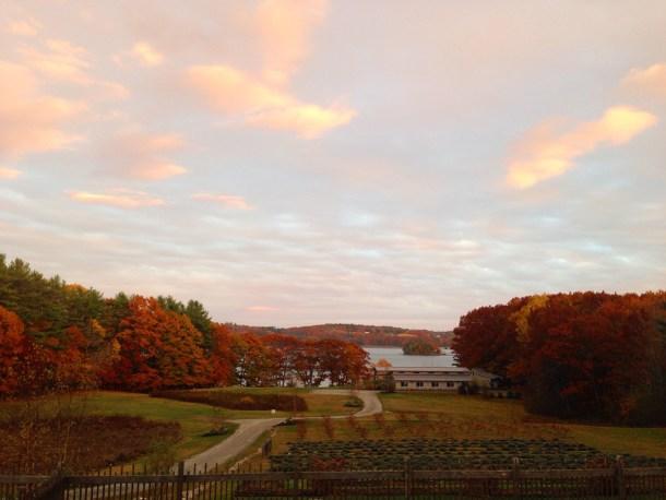 Marianmade-Farm