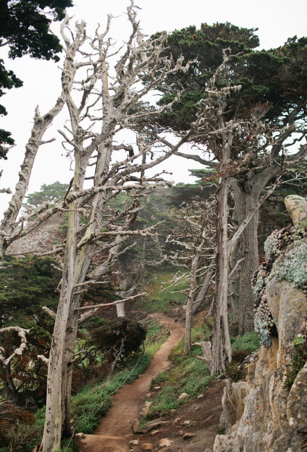 Point Lobos Carmel California