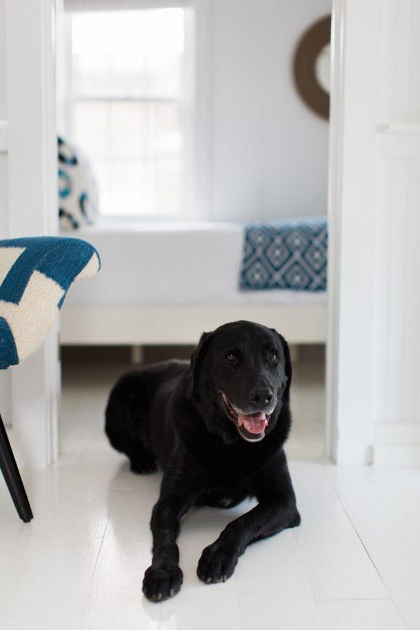 Dog Friendly Blue Inn on Plum Island by Map & Menu