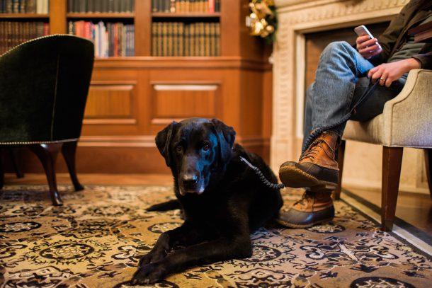 Dog Friendly Washington DC Hotels