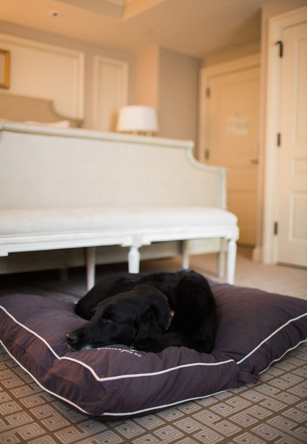 Dog Friendly The Jefferson Hotel, Washington DC by Map & Menu
