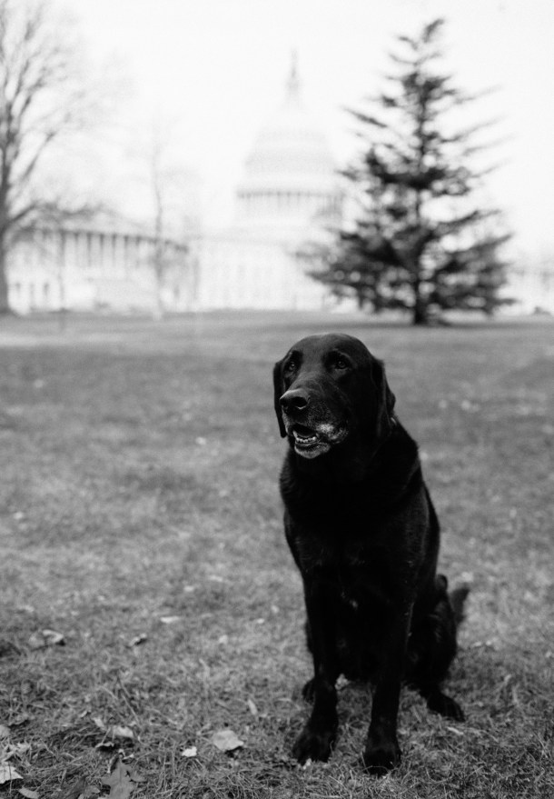 Dog Friendly Washington DC